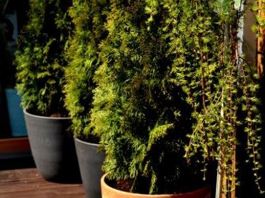 Rośliny doniczkowe w aranżacji tarasu (49866)