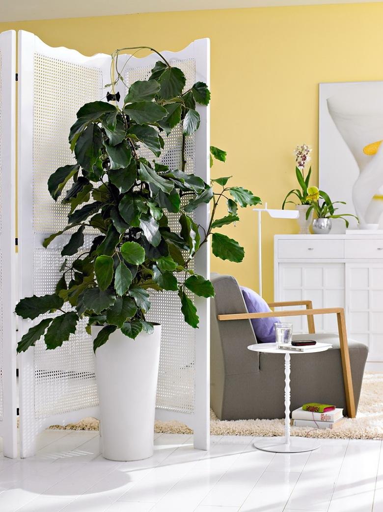 gdzie stawia kwiaty w doniczkach tag zdj cia. Black Bedroom Furniture Sets. Home Design Ideas
